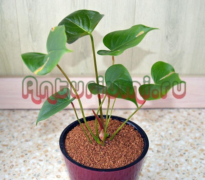 ЦеоФлора (ZeoFlora) - влагосберегающий грунт