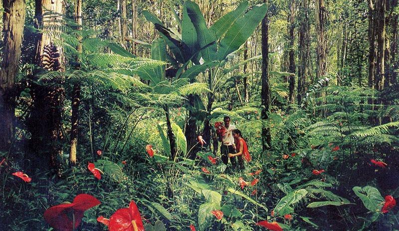 Антуриум в джунглях
