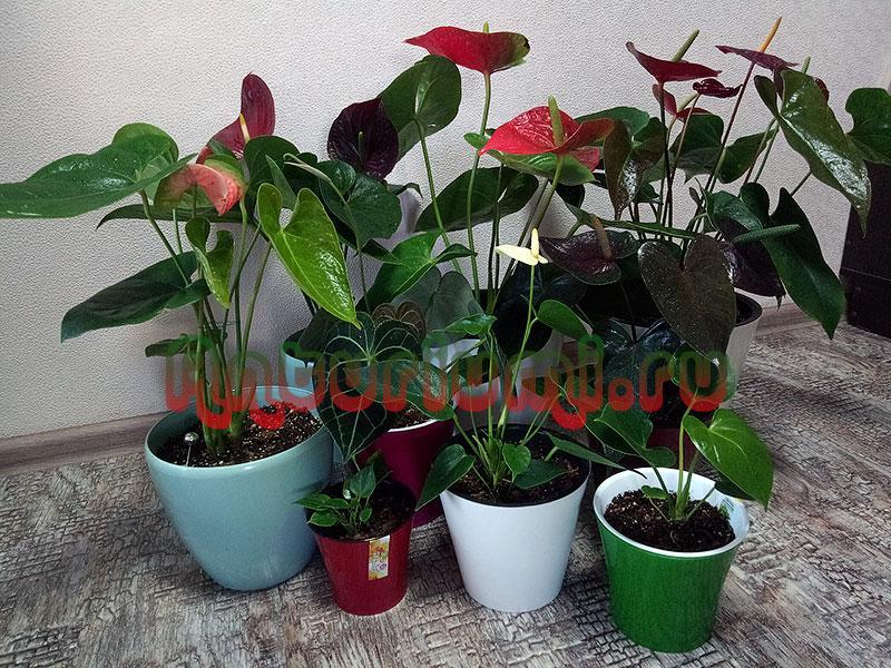 Здоровые растения в двойных горшках
