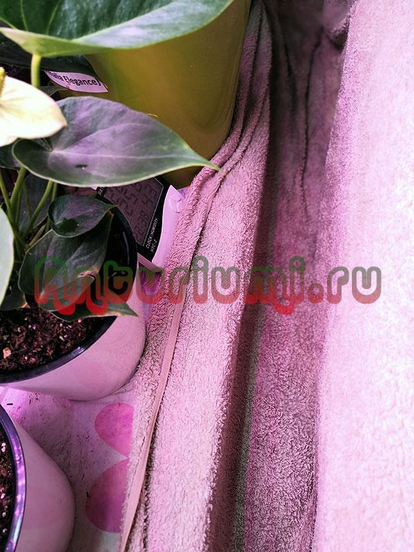 Мокрое, махровое полотенце, для поднятия влажности возле цветов