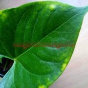 Интоксикация растений